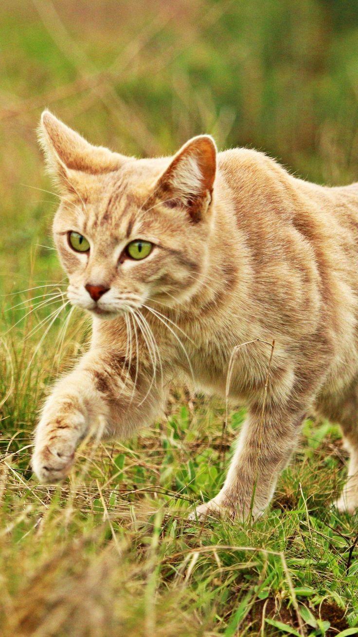 New Cat Stalking Something iPhone Mobile Wallpaper #catsaesthetic 7