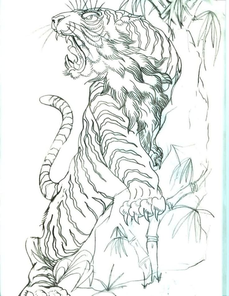 Tattoo Line Drawing Books : Best d tiger tattoo with bamboo images on pinterest