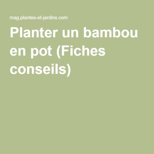 Planter un bambou en pot (Fiches conseils)