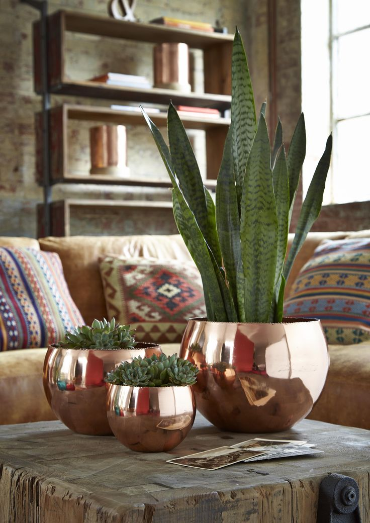 These copper bowls from Barker and Stonehouse make a striking centre piece when filled with plants.