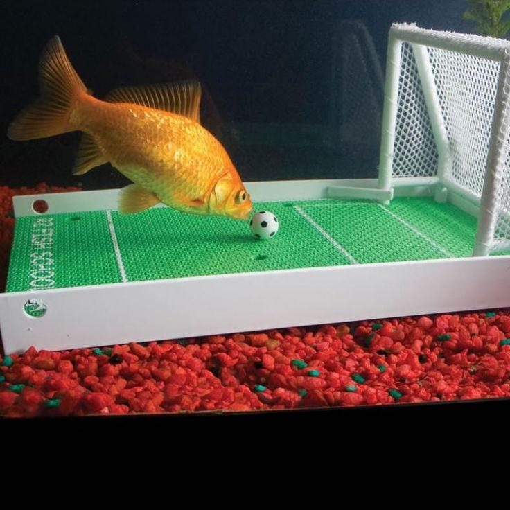 25 best fish tank decorations images on pinterest fish for Betta fish training
