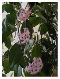 kwiaty doniczkowe - Szukaj w Google