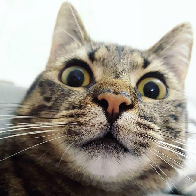 Самая смешная фото кота, открытки
