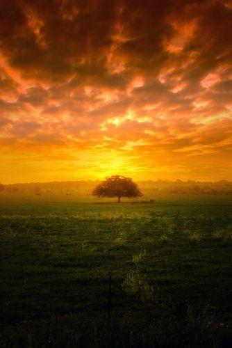 Blazing sunset with tree
