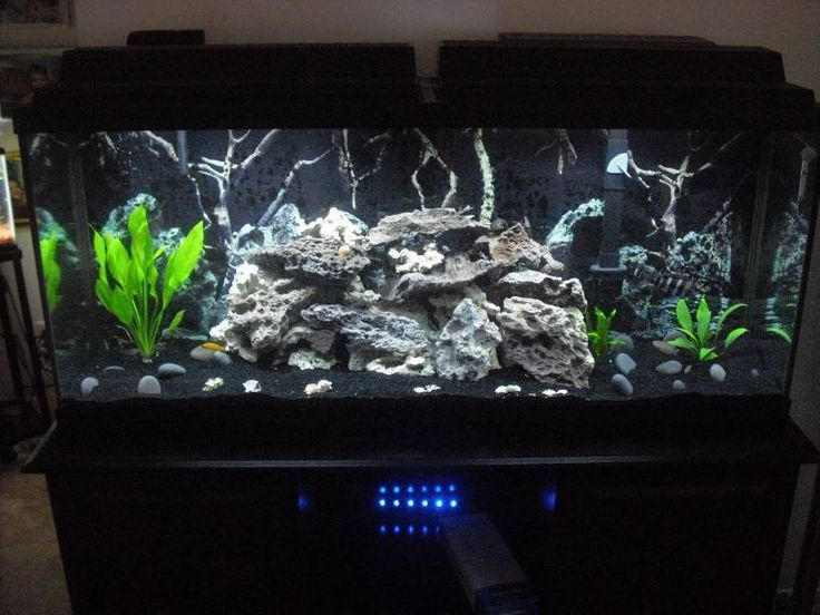 12 best black tank images on pinterest fish aquariums for Sand for fish tank