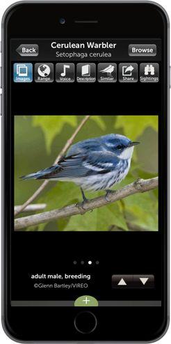 Audubon Bird Guide - Free Mobile App | Audubon