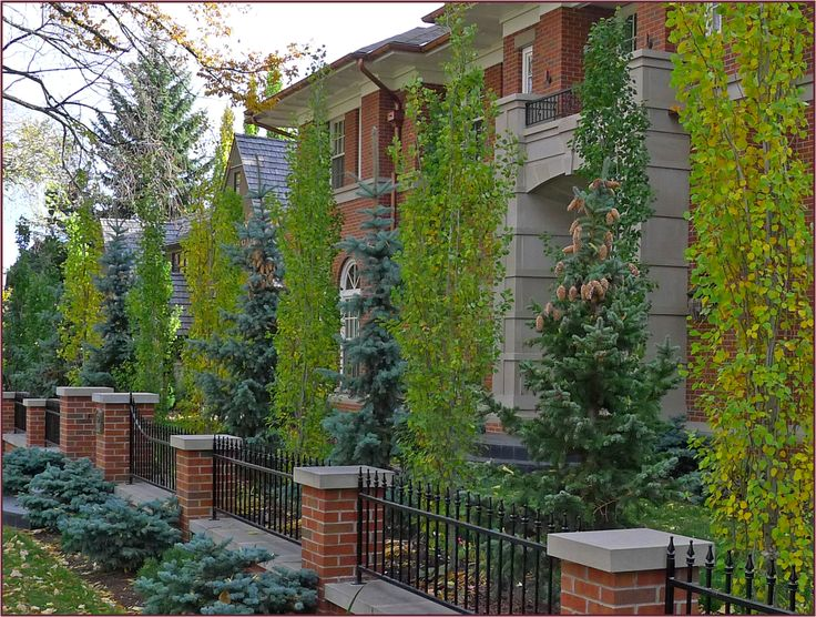 Alternating Populus Tremula Erecta And Picea Pungens Effectively Reinforce The Straight