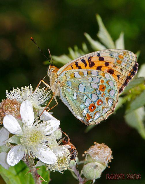 Résultat d'images pour Gifs jolis papillon de mai