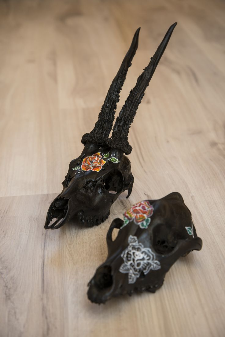 skull doe and dog