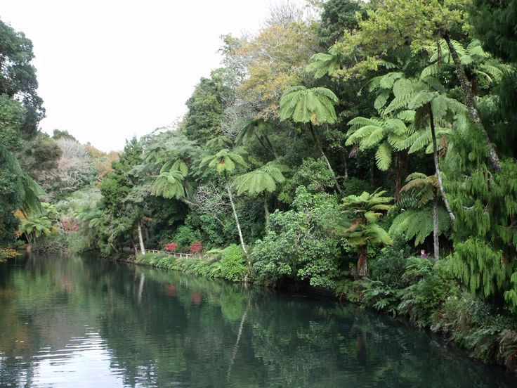 Pukekura Park, New Plymouth, NZ - Beautiful lush evergreen foliage as you walk around the lake