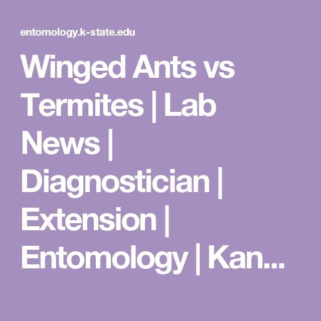 Winged Ants vs Termites | Lab News | Diagnostician | Extension | Entomology | Kansas State University