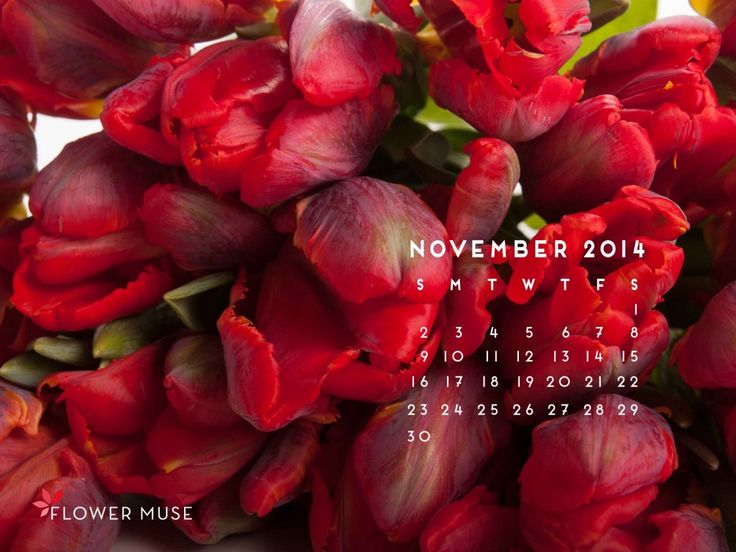 November 2014 Calendar -  Download for free on Flower Muse Blog: http://www.flowermuse.com/blog/november-2014-calendar/