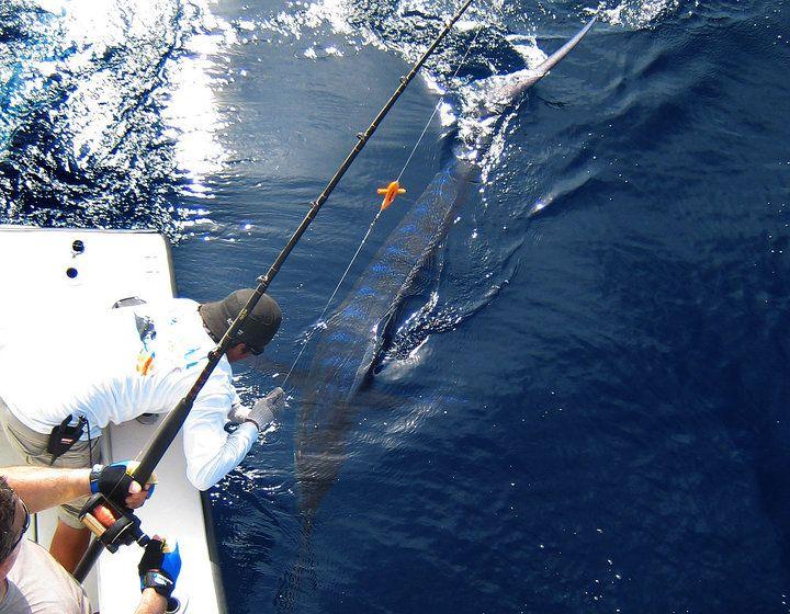 26 best deep sea fishing sport fishing images on for Deep sea fishing costa rica