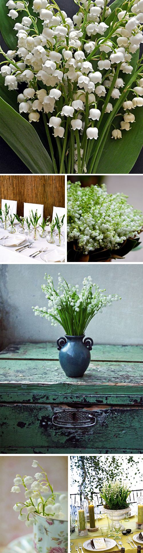 My Utmost Favorite! Lily of the valley flowers.