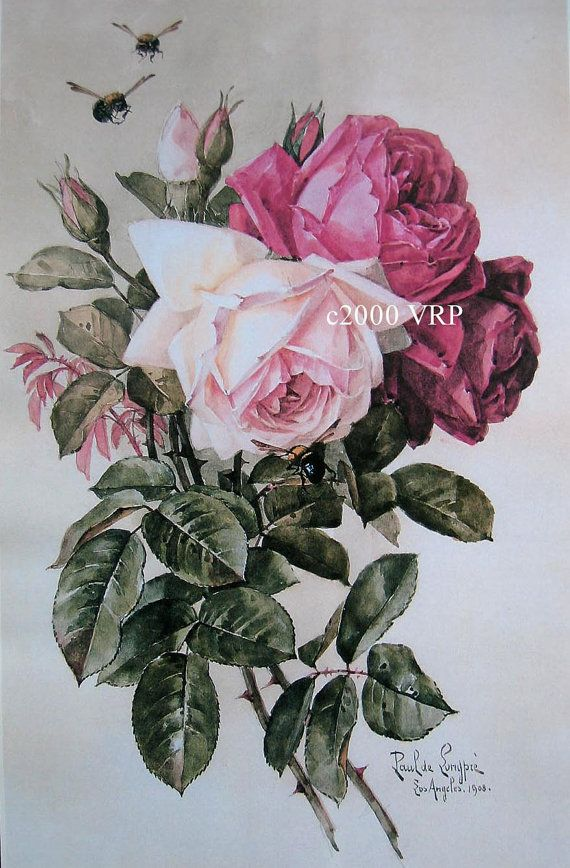 FREE SHIP Print  French Cabbage Roses Paul de Longpre Klein