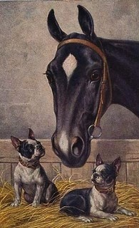 Bostons and a horse