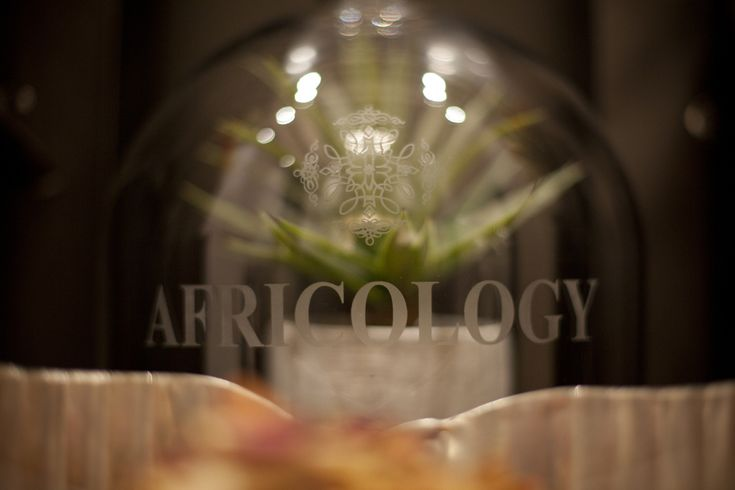 Africology