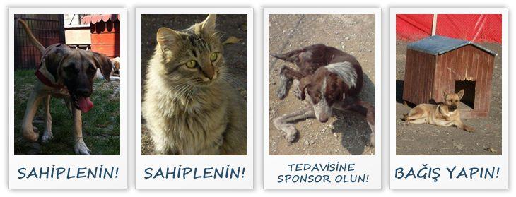 Hayvan Kurtarma Derneği üyeleri tarafından bugüne kadar kurtarılan, tedavi ettirilen ve sahiplendirilen hayvanların sayısını yüzlerle ifade edebilmenin gururunu yaşıyoruz. Dernekleşme sürecimizin tamamlanmasının ardından, hayvan kurtarma çalışmalarımıza daha geniş bir ekip ve daha da büyük bir azim ile devam etmekteyiz.