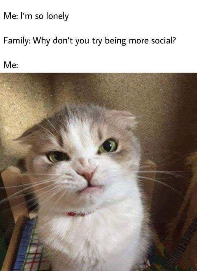 Top 75 Funny Cats Meme Entertainment Cats Catsfunny