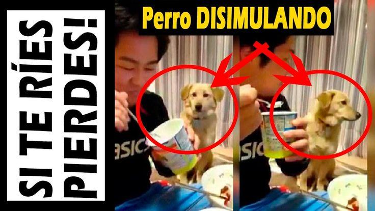 "PERRO DISIMULANDO Gracioso y Chistoso este animalito ""CARACOL NOT"" Notic..."