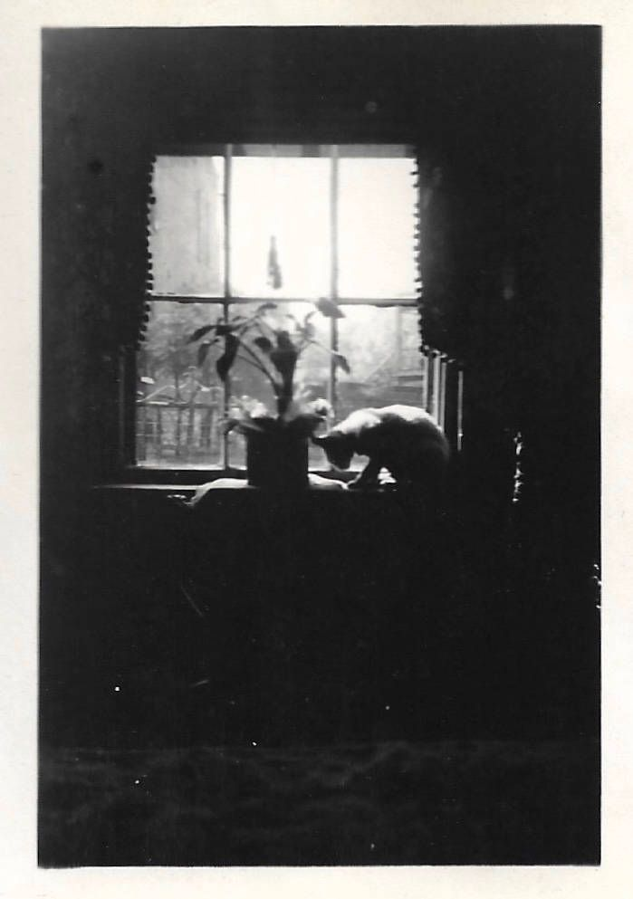 """Vintage Snapshot """"Curious Cat"""" Silhouette White Cat Window Artistic Abstract Found Vernacular Photo by SunshineVintagePhoto on Etsy https://www.etsy.com/listing/548220171/vintage-snapshot-curious-cat-silhouette"""