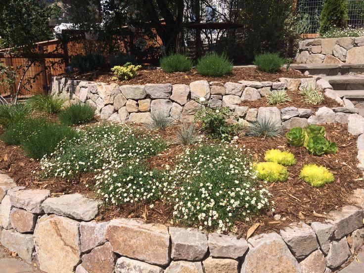 Brumer garden after planting