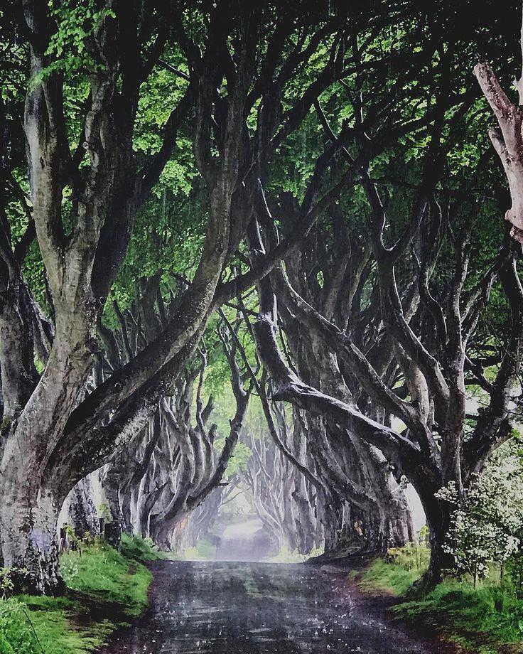 The Dark Hedges um dos cenários de Game of Thrones na Irlanda do Norte.  Durante meu intercambio em Dublin com a @egali_intercambio aproveitei um dos finais de semana para uma road trip até a Irlanda do Norte. Uma das paradas foi em um dos cenários de locação da série. As imponentes arvores foram plantadas no século XVIII e dois séculos mais tarde se tornaram-se uma das atrações mais fotografadas do país. Aproveitei a chuva pra fazer esta foto sem ninguém na estrada. As paisagens do país são…