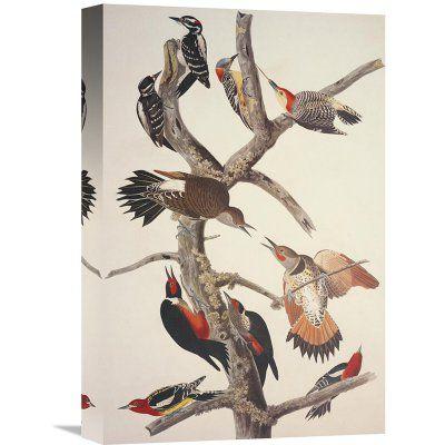 Global Gallery Hairy Woodpecker Wall Art - GCS-198126-1218-142