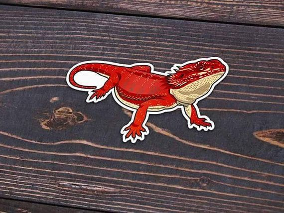 Red Bearded Dragon Sticker or Magnet