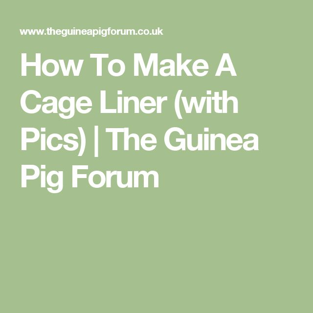 17 best images about sugar gliders on pinterest cavy for How to make a cheap guinea pig cage