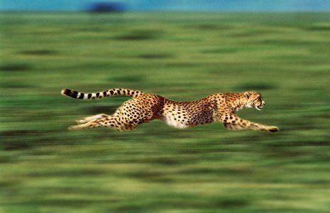 Photo by Steve Bloom (b. 1953, Johannesburg, South Africa).  ≧^◡^≦... S)