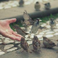 Catholic.net - ¿Qué significa tener confianza en la Divina Providencia?