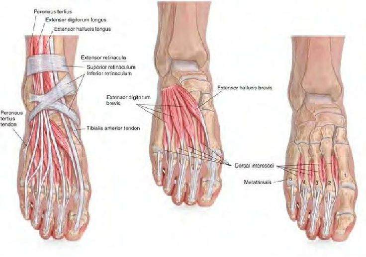 Barefoot Running Shoes Ankle Pain