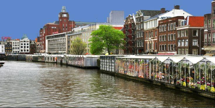 El #Bloemenmarkt o #MercadoDeFlores, que se lleva a cabo desde 1862, es uno de los lugares más visitados de #Amsterdam. http://www.viajaraamsterdam.com/lugares-para-visitar-en-amsterdam/mercado-de-flores-de-amsterdam/