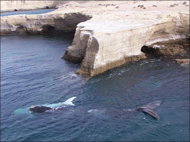 patagonia y turismo, ballenas cerca de la costa