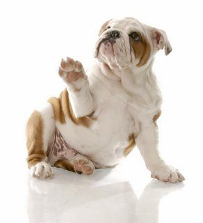 Advantages of Puppy Training Classes | Dog Behavior | Pets Best