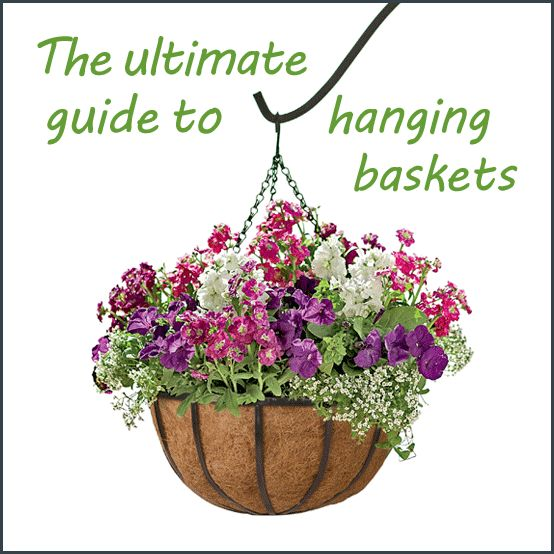ultimate guide to hanging baskets