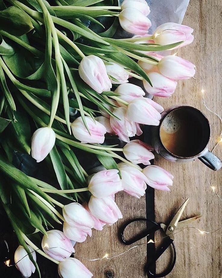 Ночь, картинки доброе утро с тюльпанами