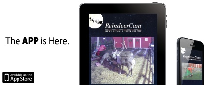 OFFICIAL REINDEER CAM ~ From Nov.16 to Dec. 24 you can watch Santa feed his reindeer at 10am, 5pm & 8pm CST. The rest of the day you can watch them play, eat & sleep! It's magical viewing for the kids!      Be sure to check out the FAQ page to learn Santa's address, how to get on the Reindeer Nice List plus learn some fun facts! I love this!!! You can check it out here.