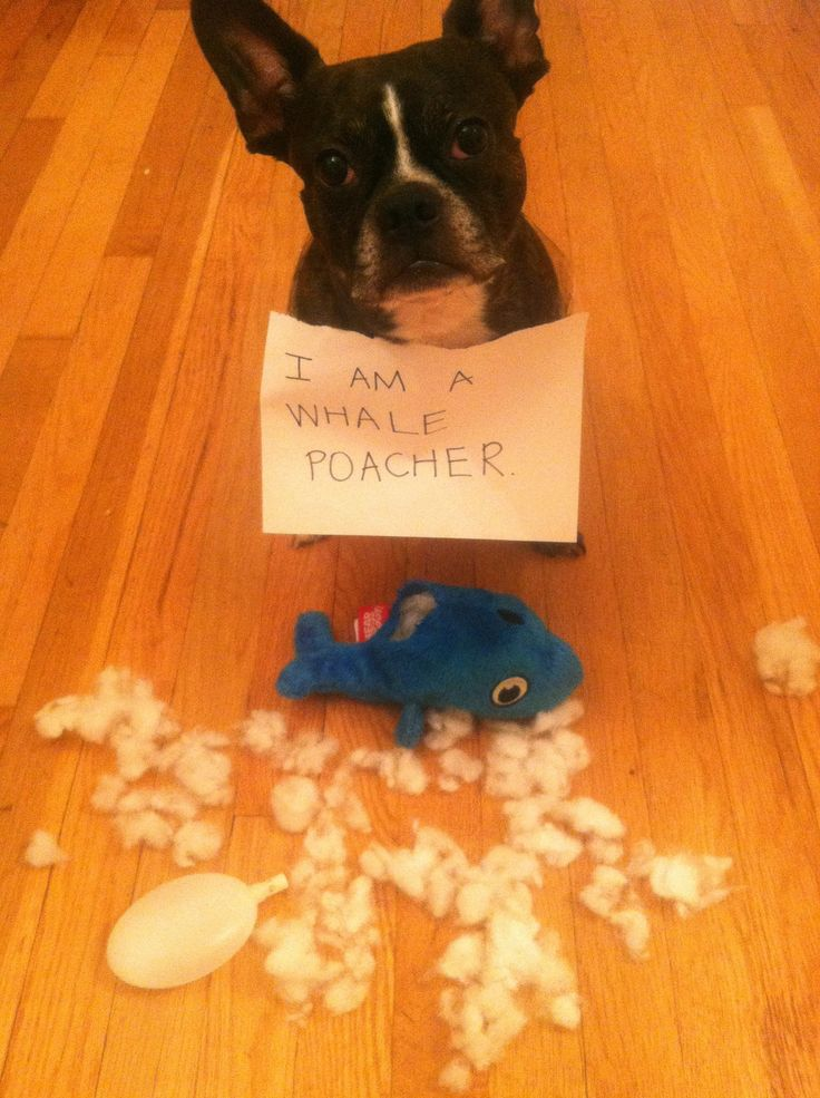 Whale shame   (not just whales....all toys, faster the better)