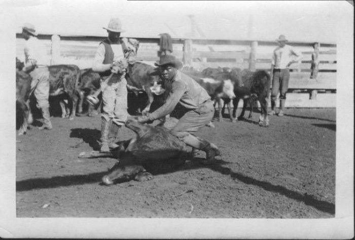 African American cowboys branding calves at John Moore Ranch, ca. 1920. Men are…