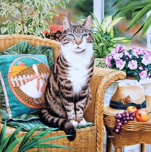 Кошки на открытках. Большой выбор.