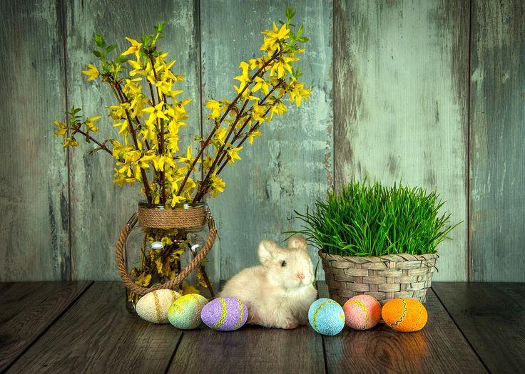 Velikonce, Tatil, Tavşan, Paskalya Yumurtaları, Yumurta