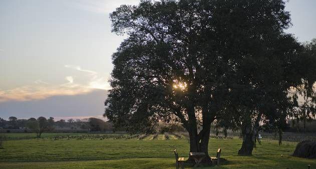 Microclima da região faz com que as uvas tannat amadureçam mais rápido. País produz 100 milhões de litros de vinho por ano