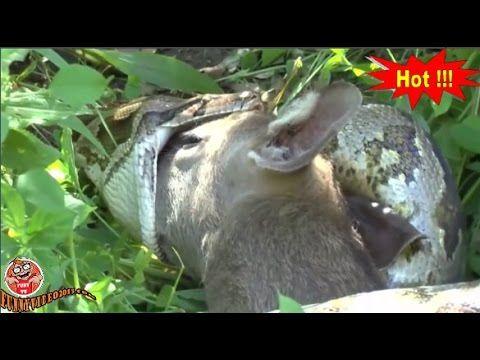 [ अजीब जानवर भाग 5 ] जंगली प्रकृति   प्रकृति में अस्तित्व की लड़ाई है जो...