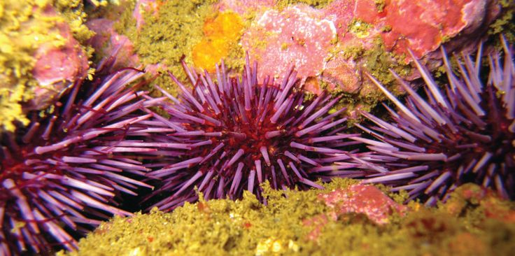 impact of ocean acidification on marine life environmental sciences essay 37 possible impact of ocean acidification on the structure of marine communities  22  school of environmental sciences, university of east anglia prof ulf  riebesell  ocean acidification on marine organisms and their.