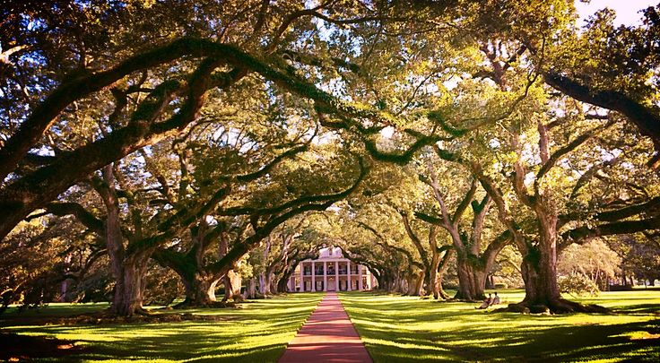 Foto: AK Stensland, fra Oak Alley Plantation i Louisiana, USA