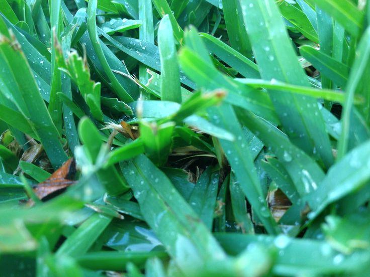 grassy grass grass