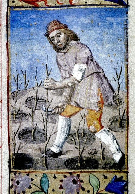 Man prunes trees. French c.1470-80.  bodl_Liturg.41