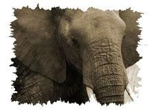 Kenya safari holiday tour exploring the Amboseli National Park, with Mount Kilimanjaro, Lake Naivasha at the Rift Valley, Lake Nakuru National Park with Flamingo and Rhino population and the great Maasai Mara Game Reserve.  http://www.naturaltoursandsafaris.com/nairobi_kenya_safaris.php